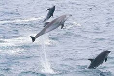 The Marine Mammal Daily, by Kate Redman: Marine mammal news...does exactly what…