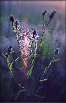 Has anyone thought of how long does it take for a spider to finish it's web? web v by StargazerLZ on DeviantArt Spider Art, Spider Webs, Itsy Bitsy Spider, Macro Photography, Levitation Photography, Winter Photography, Abstract Photography, Mundo Animal, Flower Wallpaper
