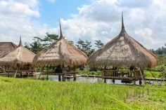 Wir waren nur vier Tage in Ubud, es hätten gerne mehr sein dürfen. Hier sind meine Top 10 Dinge, die man in Ubud nicht versäumen sollte: