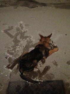 Clumsy puppy