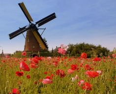 Netherlands Travel Guide - Open