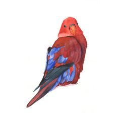 Parrot Painting P036 Print of watercolor painting by Splodgepodge, $20.00