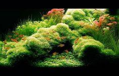 LemonBest® 36 LED Color-changing Underwater Aquarium Light for Water Garden Pond Pool Fish Tank, UK Plug, Pack of 4 Discus Aquarium, Nature Aquarium, Planted Aquarium, Aquarium Landscape, Tropical Freshwater Fish, Freshwater Aquarium, Tropical Fish, Colorful Fish, Aquascaping
