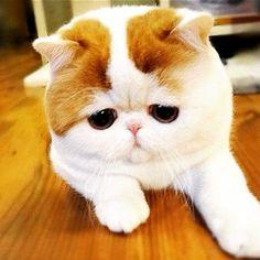 "@catsofin5tagram's photo: ""#cat #cats #cute #catsofin5tagram #catsofinstagram #like #follow"""