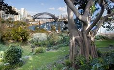 Lavender Bay: There's no paint, only plants. No canvas, only soil. No pencils or brushes, only sunshine and greenery. But the 'optical erotica' that inspired Brett Whit. Picnic Spot, Picnic In The Park, Family Picnic, Summer Picnic, Visit Sydney, Hidden Garden, Lavender Garden, Beautiful Places To Travel, Time Out