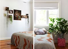 plants on wall - Bonnie and Neil chevron bedding via House and Home, Remodelista