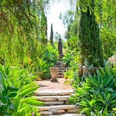 Lovely lines in this California garden, featuring architectural Italian cypresses and Agave attenuate.