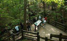 Rock Bridge Memorial State Park | Missouri State Parks