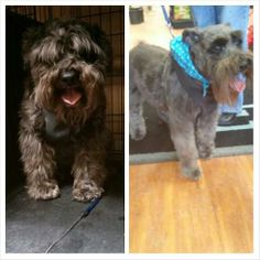 Oliver before his spa day, & after his spa day!