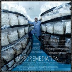 Mycoremediation | Lexicon of Food