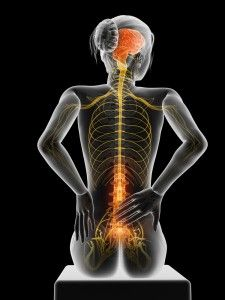 At Bankstown Health, Our Chiropractors aim to improve nervous system function primarily through chiropractic adjustments, to help remove any interference. Nervous System Function, Chiropractic Adjustment, Amazing Body, Spinal Cord, Pain Management, Plastic Surgery, Nice Body, Back Pain, Human Body