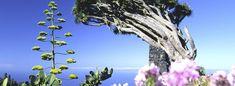 La Palma Turismo Rural | Ferienhaus La Palma, Teneriffa, El Hierro | Karin Pflieger Portugal, Clouds, Outdoor, Santa Cruz, Palms, Iron, Holiday Destinations, Travel Destinations, Traditional House