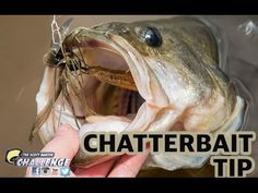 How to fish a Chatterbait lure: TRAILERS - Big Bass love striking this lure. - YouTube