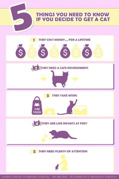 In this post you will read about 5 things that you need to know before adopting a cat!