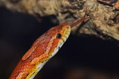 Meanings of dream about snake can contain different meanings according to the…