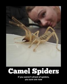 I'm afraid of camels and spiders, and now camel spiders…  There's not enough FIRE in the world!