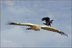 national+geographic+pictures+2014 | Top 25 Wild Bird Photographs of the Week #67