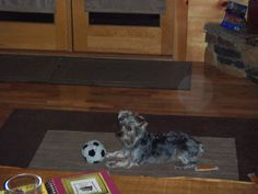 Sophie at the cabin.....with her soccer ball toy