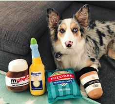 Spoil your pup with all this toys Cute Dog Toys, Cool Toys, Aston Irwin, Super Cute Puppies, Dogs And Puppies, Funny Animals, Your Dog, Have Fun, Pets