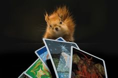 "Have you ever found a card in one of your tarot decks named ""The Happy Squirrel""?"