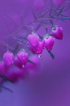 """身を知る雨・・・(""""mi wo siru ame…"""" which means 'tears' and 'rain which knows itself') by Chishou Nakada"""