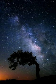 It looks like the milky way is pushing the tree branches. Beautiful.