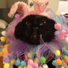 This kitty, who is plotting his vengeance as we speak. Crazy Cat Lady, Crazy Cats, Easter Cats, Easter Bunny, Cat Costumes, Easter Costumes, Animal Dress Up, Best Cat Gifs, Animal Tumblr