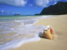 oahu hawaii | Conch_Shell_Oahu_Hawaii.jpg