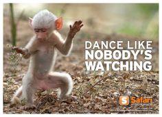 A Rare Snow White Baby Baboon Discovered Dancing Around Zambia Monkey Dance Chimpanzee