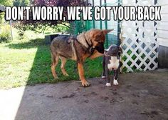 German Shepherds know how it feels to be discriminated against. awe <3
