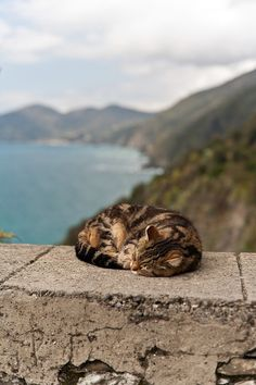 Nap with a view