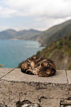 A beautiful place to take a nap...