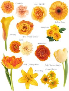 Flower names by color pinterest flower collection and flowers flowers types mightylinksfo