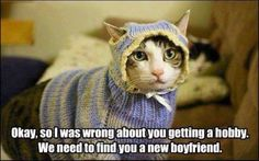 Forget the hobby. Get a boyfriend. LOL! #cat #knitting #funny #humor