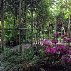 Heller Garten - Bild von Heller Garden, Gardone Riviera - TripAdvisor