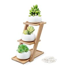Puaida Inch Small Modern Round White Ceramic Succulent Plant Pot, Planter for Succulent Plants, Small Cactus and Herbs with Bamboo Stand and Stone for Room Decor- Set of 3 Small Cactus, Small Succulents, Planting Succulents, Potted Plants, Succulent Display, Succulent Centerpieces, Succulent Terrarium, Living Room Plants, House Plants Decor
