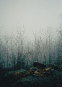 the rocks + fog (Philip Queen)