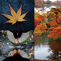 Beautiful Quiet Autumn in Kyoto