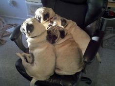 Making room for everybody...that's why pugs are the best!