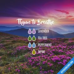 Essential oils Thyme to Breathe — Essential Oil Diffuser Blend Does Practical Parenting Stress you o Thyme Essential Oil Uses, Essential Oils For Colds, Essential Oil Scents, Essential Oil Diffuser Blends, Doterra Diffuser, Essential Oils For Breathing, Diffuser Recipes, Young Living Oils, Breathe