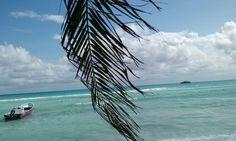 El Paraiso - Playa del Carmen