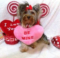 Cosita presiosa, Mya posa para su foto de San valentin con mucha seriedad