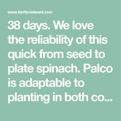 38 days. We love the reliability of this quick from seed to plate spinach. Palco is adaptable to planting in both cool and warm seasons. Versatile for harvest as young, baby greens, or allowed to attain its full size. Bolt and disease resistant plants hold well in the field without flowering or succumbing to mildew. HR: DM 1-5, 8-9, 11-12, 14.