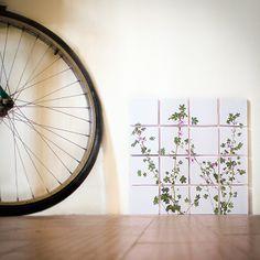 print on ceramic tiles - Malva Selvatica