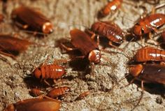 Athens Guide, Insects, Crafts, Tips, Nerd, Craft Ideas, Roaches, Meaning Of Dreams, Manualidades