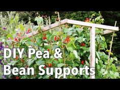 ▶ DIY Pea & Bean Supports - How to Make the Best Frames and Trellis for Climbing Vegetables - YouTube. Training climbing vegetables up supports is a great way to get maximum yield from minimum space. Building your own supports is easy, fun and can make an impressive feature in your garden. This is a fantastic video and it shows you our tutorial, with dimensions for making this wonderful bean rack.