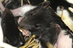 What Attracts Mice to Your Home? - EcoTek Termite and Pest Control
