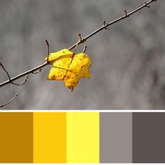 Yellow and Gray Colour Palette