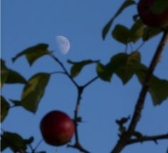 "Moon Through apple trees in Nova Scotia. (Credit: Murdo Messer)  Response to Neil Armstrong's family: ""For those who may ask what they can do to honor Neil, we have a simple request. Honor his example of service, accomplishment and modesty, and the next time you walk outside on a clear night and see the Moon smiling down at you, think of Neil Armstrong and give him a wink."" Ian Ridpath, ""Exploring the Apollo Landing Sites"" http://www.bellaonline.com/articles/art29536.asp"