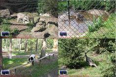 Bildergebnis für zoo metelen